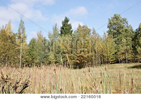 Autumn in a biotope