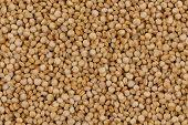 Quinoa Seeds Close Up poster