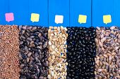 Big Five Types Of Bean Grain, Bean Pod, A Lot Of Beans Texture Pattern Background For Web Design And poster