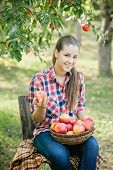 Girl With Apple In The Apple Orchard poster
