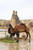 Rock Formations At Cappadocia, Anatolia, Turkey poster