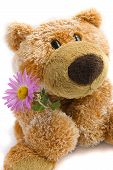 foto of teddy-bear  - Soft toy the bear with a flower on a white background - JPG