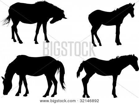 Abbildung mit vier Pferden isoliert auf weißem Hintergrund