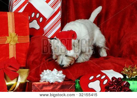Regalos de Navidad para el cachorro