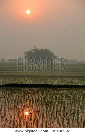 Sunset on the Terai