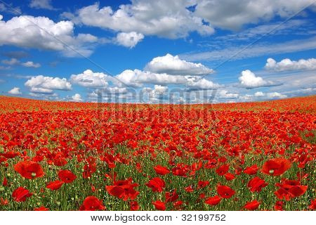 Picturesque landscape with poppies plantation