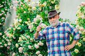 Spring Time. Bearded Senior Gardener In An Urban Garden. Portrait Of Handsome Old Bearded Man On Spr poster