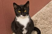 Close-up Photo Of Black And White Stray Cat, Beautiful Female Kitty poster