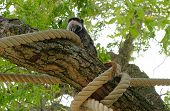 Closeup Portrait Of A Emperor Tamarin Saguinus Imperator, Primate In A Tree On A Bright, Vibrant And poster