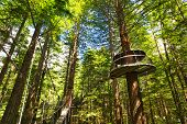 Treewalk Through Forest Of Tree Ferns And Giant Redwoods In Whakarewarewa Forest Near Rotorua, New Z poster