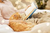 pets, hygge and people concept - close up of red tabby cat and female owner reading book in bed at h poster