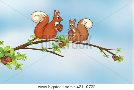 Illustration of squirrels sitting on a branch