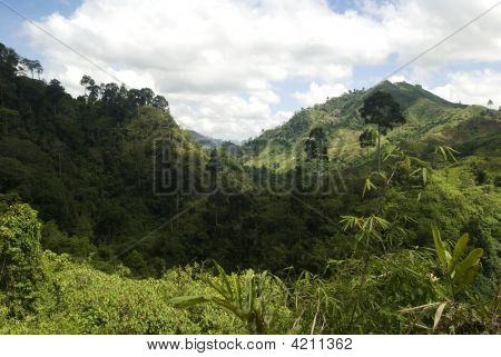 Jungle Valley, Mindanao, Philippines