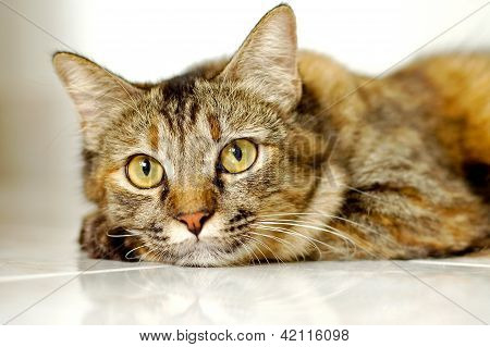 Cat light brown