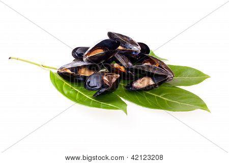 Stewed Mussels