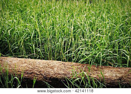Log fallen on green grass