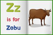 stock photo of zebu  - Illustration of a zebu in a book on a white background - JPG
