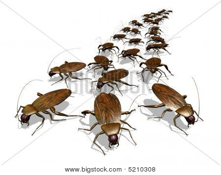 Cockroach Invasion