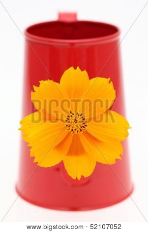 cosmos flower in a watering can