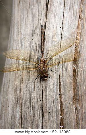 Dragonfly on a Gray Log