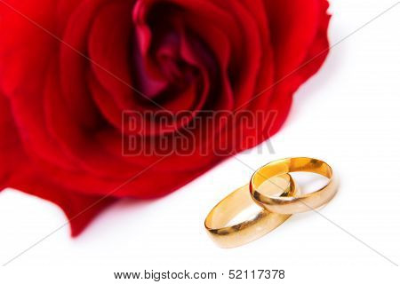 Brightly Red Rose With Two Wedding Rings