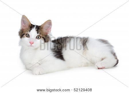 Cute Kitten On A White Background.