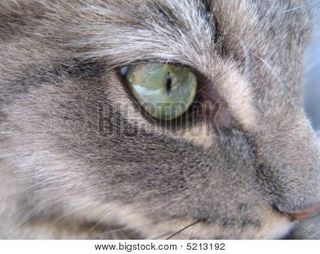 Eye of cat Ezra