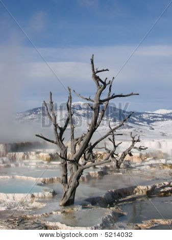 Tree in hot springs