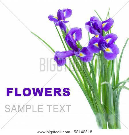 blue irise flowers posy