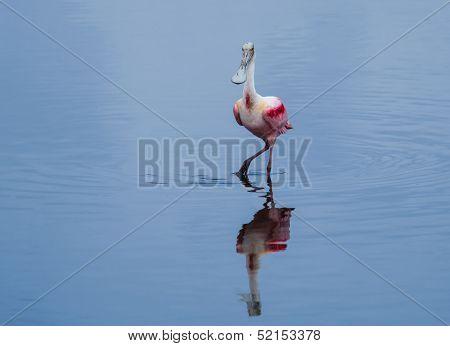Spoonbill Modeling