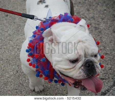 Lagrange Pet Parade Vii