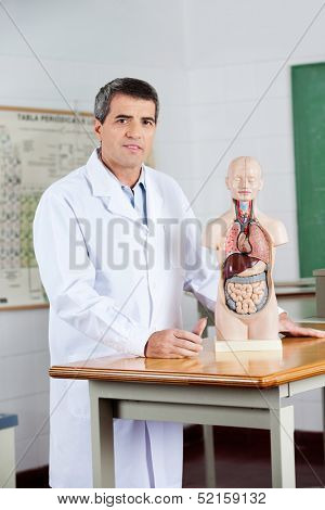 Portrait of confident mature teacher standing with anatomical model at desk in classroom