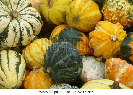 Different Pumpkins