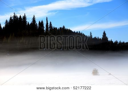 Fogy Winter Forest