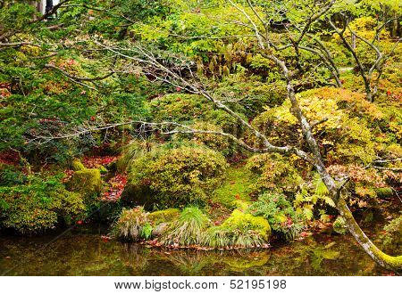 Forest and lake during autumn