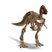 Постер, плакат: T rex скелет