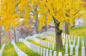 pic of headstones  - Arlington National Cemetery near to Washington DC - JPG