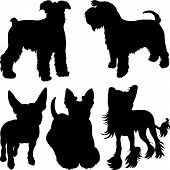 image of schnauzer  - set of silhouettes of dogs schnauzer terrier Scottish Terrier Bull Terrier Chinese Crested breed in the rack - JPG