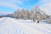 Snowy Landscape In The Narew River Valley. Beautiful Winter Trail.