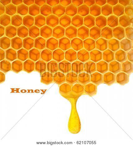 Honey macro in comb texture pattern background.