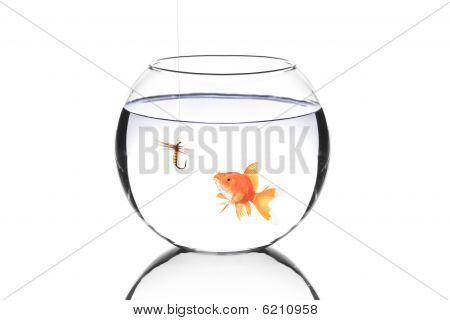 Fish Bowl With A Fishing Hook And A Fish