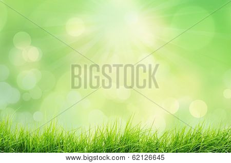 Spring or summer nature landscape with grass and bokeh lights