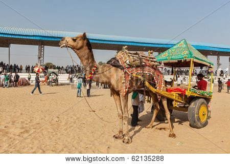 PUSHKAR, INDIA - NOVEMBER 22, 2012: Camel taxi for tourists at Pushkar camel fair (Pushkar Mela) - annual five-day camel and livestock fair, one of the world largest camel fairs and tourist attraction