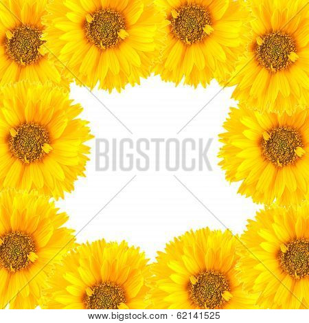 Frame from flowers isolated on white background