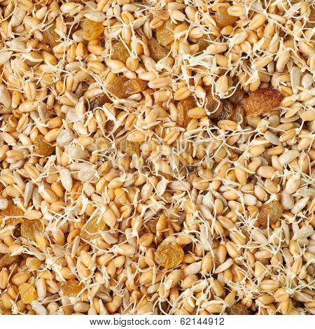 Mixed Wheat Sprouts, Raisins And Sunflower Seeds