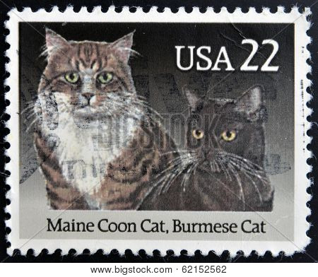 A stamp printed in USA shows a Maine coon cat and Burmese Cat