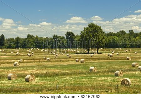 Countryside Landscape With Hay Bales