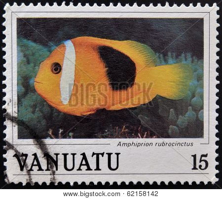 Stamp printed in anuatu shows a Red anemonefish (Amphiprion rubrocinctus)