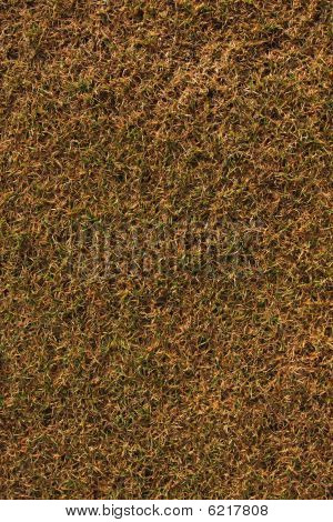 Old Grass Background