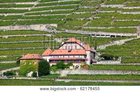 Vineyards of the Lavaux region over lake Leman (lake of Geneva)
